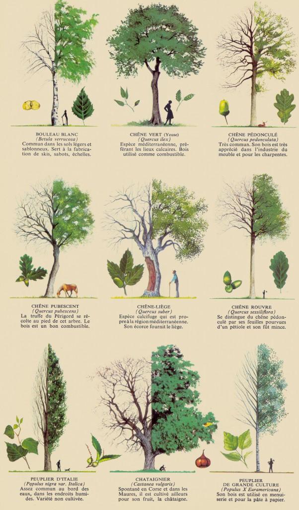 Les arbres 3 ad
