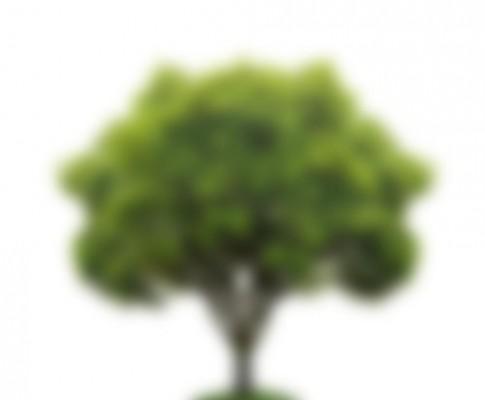 Les arbres en infrarouge