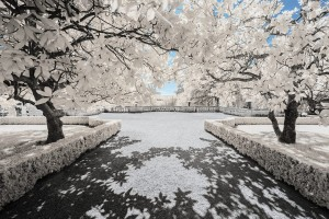 photo-infrarouge-photographie-infrared-binet-pierre-louis-ferrer-7