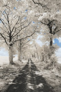 photo-infrarouge-photographie-infrared-pierre-louis-ferrer-5