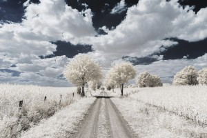 photo-infrarouge-photographie-infrared-pierre-louis-ferrer-6