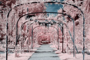 photo-infrarouge-photographie-infrared-raphaele-goujat-3