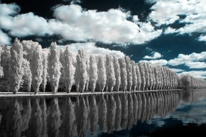 photo-infrarouge-photographie-infrared-raphaele-goujat-5