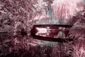 photo-infrarouge-photographie-infrared-reuilly-raphaele-goujat-1