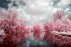 photo-infrarouge-photographie-infrared-reuilly-raphaele-goujat-2