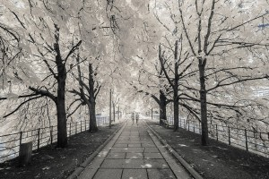 photo-infrarouge-photographie-infrared-simonlefranc-pierre-louis-ferrer-5