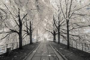 photo-infrarouge-photographie-infrared-simonlefranc-pierre-louis-ferrer-5