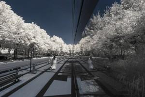 photo-infrarouge-photographie-infrared-simonlefranc-pierre-louis-ferrer-6
