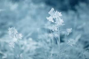 photo-infrarouge-photographie-infrared-simonlefranc-raphaele-goujat-1