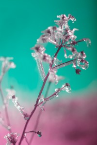 photo-infrarouge-photographie-infrared-simonlefranc-raphaele-goujat-10