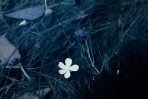 photo-infrarouge-photographie-infrared-simonlefranc-raphaele-goujat-2