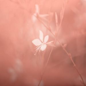 photo-infrarouge-photographie-infrared-simonlefranc-raphaele-goujat-4