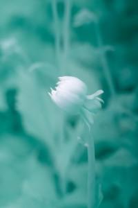 photo-infrarouge-photographie-infrared-simonlefranc-raphaele-goujat-6