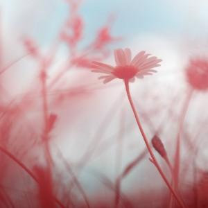 photo-infrarouge-photographie-infrared-simonlefranc-raphaele-goujat-8