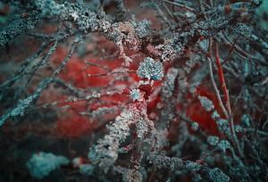 photo-infrarouge-photographie-infrared-simonlefranc-yann-philippe-2