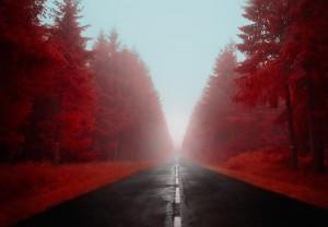 photo-infrarouge-photographie-infrared-simonlefranc-yann-philippe-7
