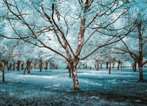 photo-infrarouge-photographie-infrared-simonlefranc-yann-philippe-8