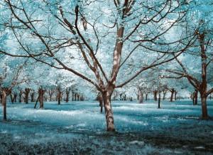 photo-infrarouge-photographie-infrared-simonlefranc-yann-philippe-8