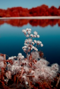 photo-infrarouge-photographie-infrared-simonlefranc-yann-philippe-9