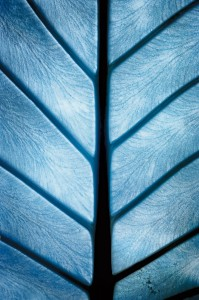 photo-infrarouge-photographie-infrared-villiot-rapée-yann-philippe-11