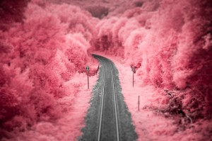 photo-infrarouge-photographie-infrared-vincent-hedou-3
