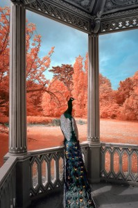 photo-infrarouge-photographie-infrared-yann-philippe-1